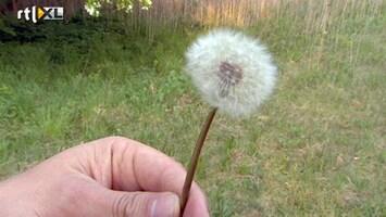 Editie NL Wapen je tegen de pollenbom