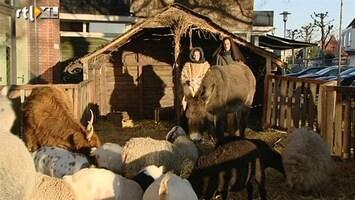Editie NL Os en ezel de kerststal uit