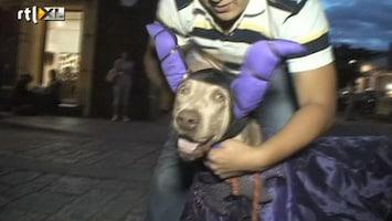 RTL Nieuws De grootste verkleedpartij ter wereld voor honden