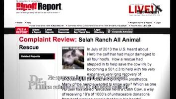 Dr. Phil Animal activist under attack