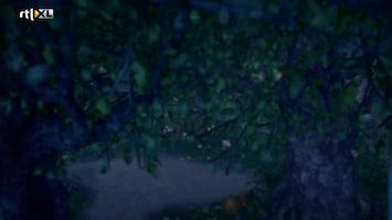 Sprookjesboom Wie niet weg is, is de reus