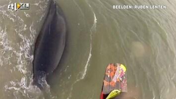RTL Nieuws Kitesurfer springt over gestrande bultrug