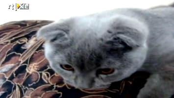 Editie NL Dit is 's werelds schattigste kat