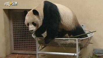 RTL Nieuws Dierentuin hunkert naar pandaseks