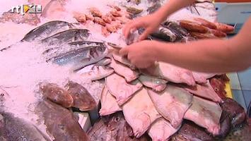 RTL Nieuws Het gaat goed met de vissen in de Noordzee