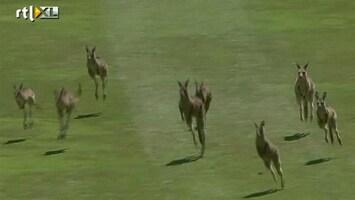 RTL Nieuws Kangoeroes nemen golftoernooi over