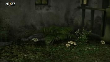 Sprookjesboom - Niet Kwaad Te Krijgen