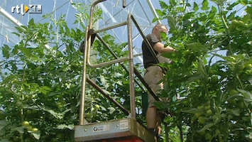 RTL Nieuws 'Importstop groente bizar en onnodig'