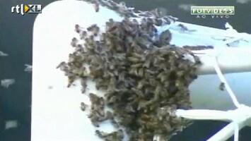RTL Nieuws Zwerm bijen legt voetbal stil