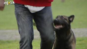 Editie NL Hond als bodyguard