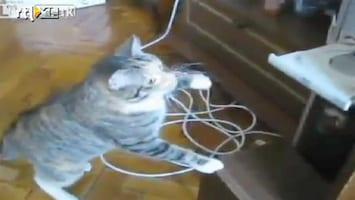 Editie NL Kat vertrouwt cd-speler niet