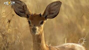 RTL Boulevard De nieuwe natuurserie 'Africa'