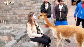 Editie NL Lama spuugt meisje onder