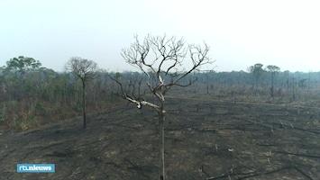 De verwoesting van de Amazone gefilmd met een drone