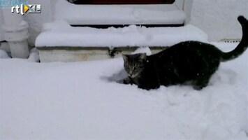 Editie NL Lol: kat wordt gek van de sneeuw