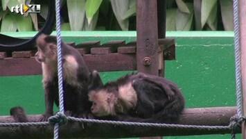 RTL Nieuws Costa Rica verbiedt dierentuinen