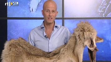 RTL Nieuws De wolf is weer terug in Nederland