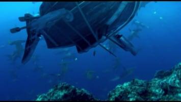 Piet Piraat Wonderwaterwereld Zeeschildpad