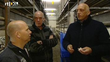 Herman Den Blijker: Kerst Zonder Herrie - Herman Tussen De Champignons