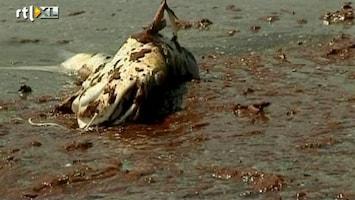 RTL Nieuws BP bekent schuld voor olieramp