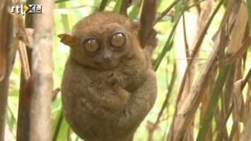 RTL Nieuws Dierenpark vangt zeldzaam spookdiertje op