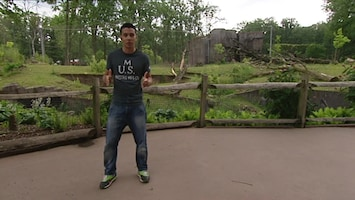 Burgers' Zoo En Waarom - Lynn Over Meten