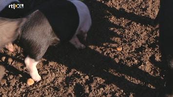 Hermans Passie Voor Eten - Afl. 16
