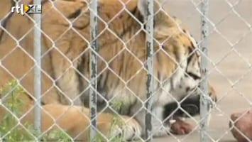 RTL Nieuws Echte tijger als mascotte verboden