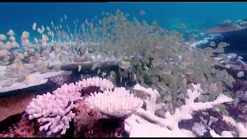 Piet Piraat Wonderwaterwereld Grote witte haai