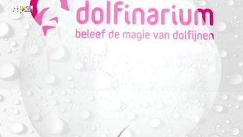 Dolfijnen In De Hoofdrol - Afl. 1 (expired)