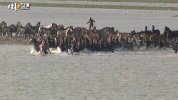 RTL Nieuws Reddingsactie van paarden in Marrum (2006)