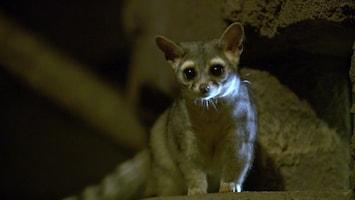 Burgers' Zoo Natuurlijk De katfret