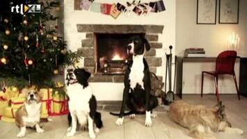 Editie NL Honden zingen Jingle Bells