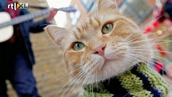 RTL Nieuws Dit is Bob: straatkat en wereldberoemd