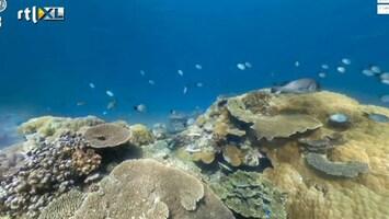 Editie NL Google Streetview voor onderwater