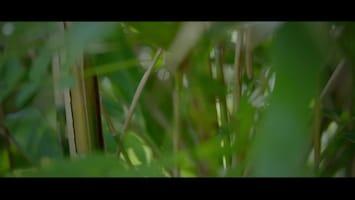 Burgers' Zoo Natuurlijk - Sumatraanse Tijgers