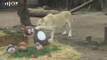 RTL Nieuws Paashaas geen prooi voor leeuw
