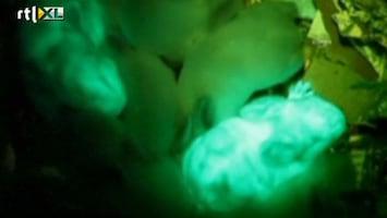 RTL Nieuws Nieuw: glow in the dark... konijnen