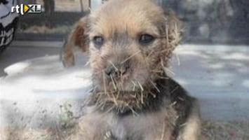 Editie NL Zielig: puppy gered uit cactus