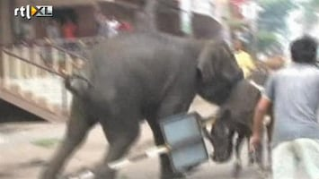 RTL Nieuws Olifanten razen door stad in India
