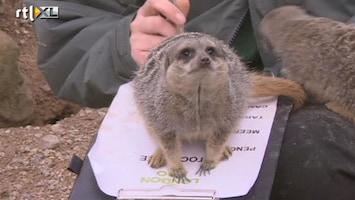 RTL Nieuws Dieren tellen in Londen Zoo