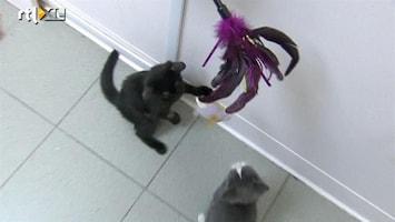 RTL Nieuws Met je katten spelen via internet