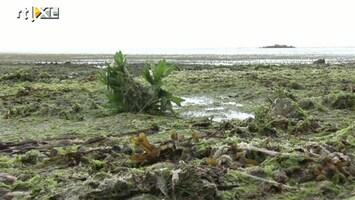RTL Nieuws Stranden Frankrijk dicht om algenplaag