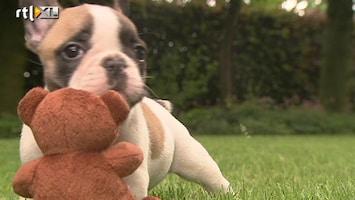 Editie NL Iedereen aan de Franse bulldog!