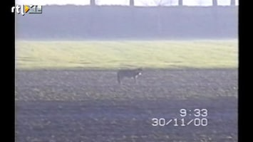 RTL Nieuws Wolf al in 2000 gesignaleerd in Nederland