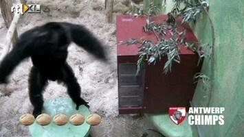 RTL Nieuws Wie is de slimste aap van België?