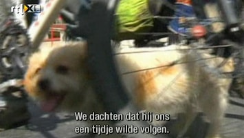 Editie NL Hond rent 1700 km