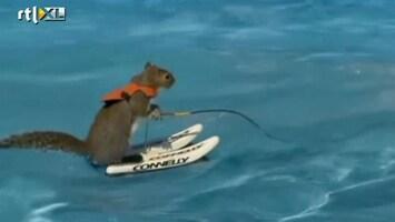 RTL Nieuws Eekhoorn kan waterskiën
