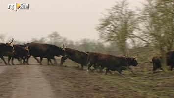 Editie NL Op Safari in eigen land