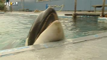 RTL Nieuws Rechter beslist over lot orka Morgan